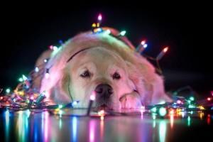 psi jako stromeček1