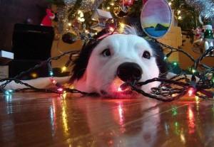 psi jako stromeček11