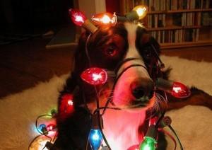 psi jako stromeček15