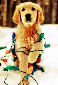 psi jako stromeček17