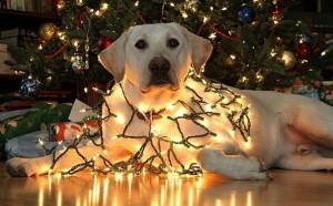 psi jako stromeček23
