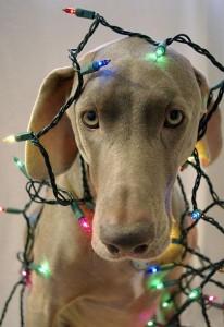 psi jako stromeček3