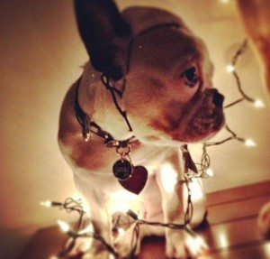 psi jako stromeček4