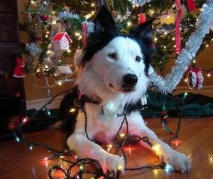 psi jako stromeček9